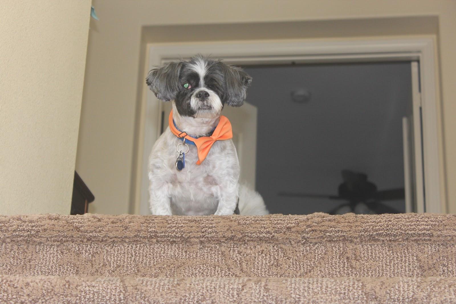 Tania Tomyn's Dog